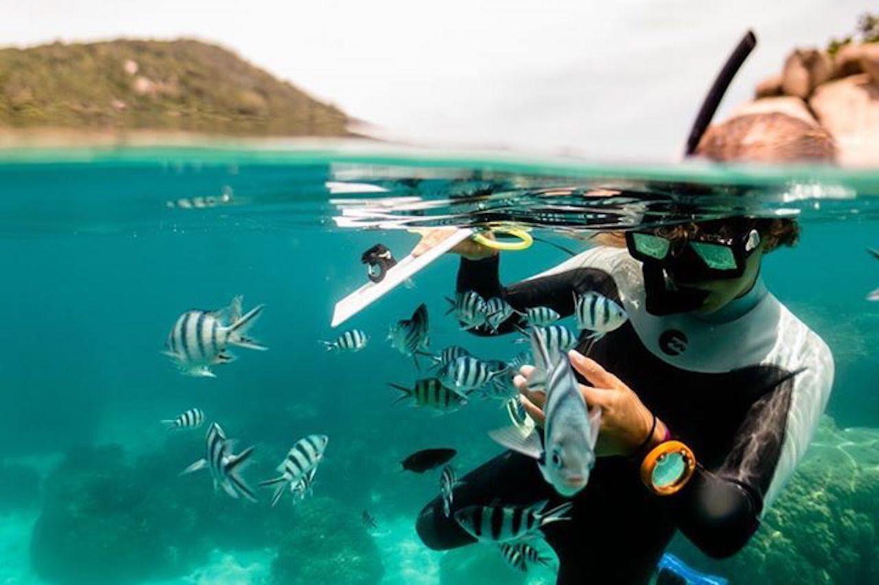 Bewahre das Ökosystem rund um eine Insel in Thailand
