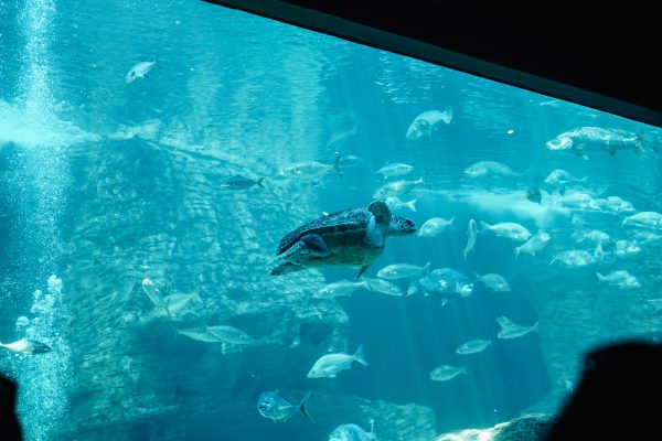 aquarium_kapstadt