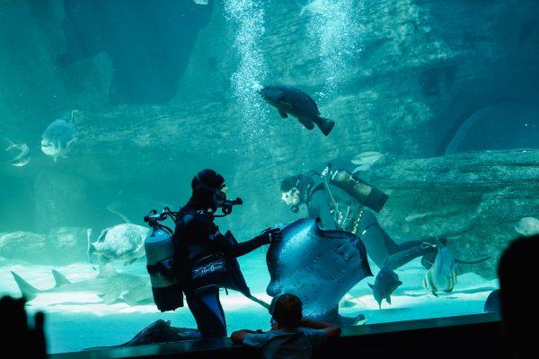 aquarium_kapstadt03