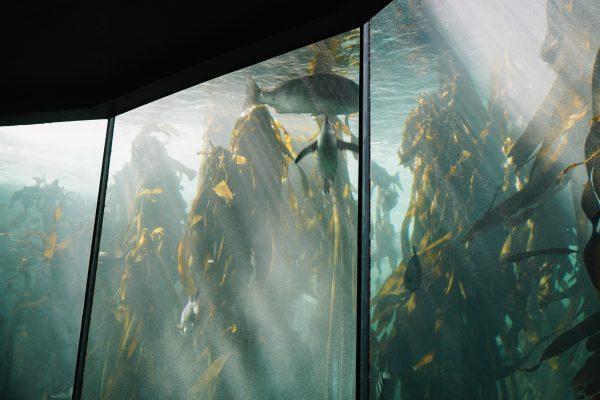 aquarium_kapstadt09