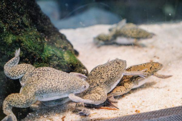 aquarium_kapstadt10