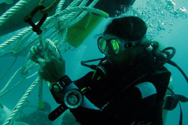 Meeres_Ökosystem01