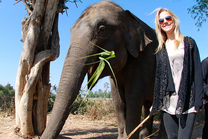 Surin Elephants6
