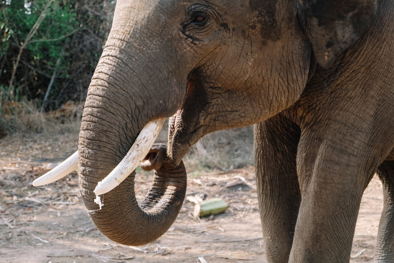Care for elephants in rural Thailand