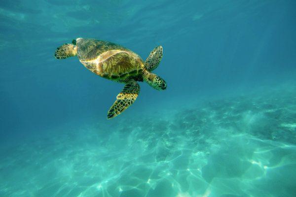 Schildkröten-Projekt2