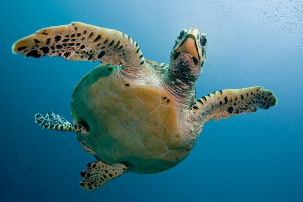 Schildkröten-Projekt6