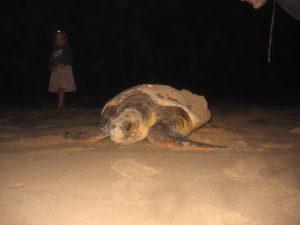 Schildkröten Projekt