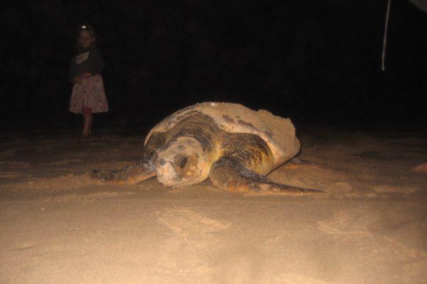 Schildkröten-Projekt7