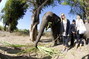 Surin Elephants Thailand