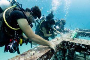 Marine volunteering in Thailand